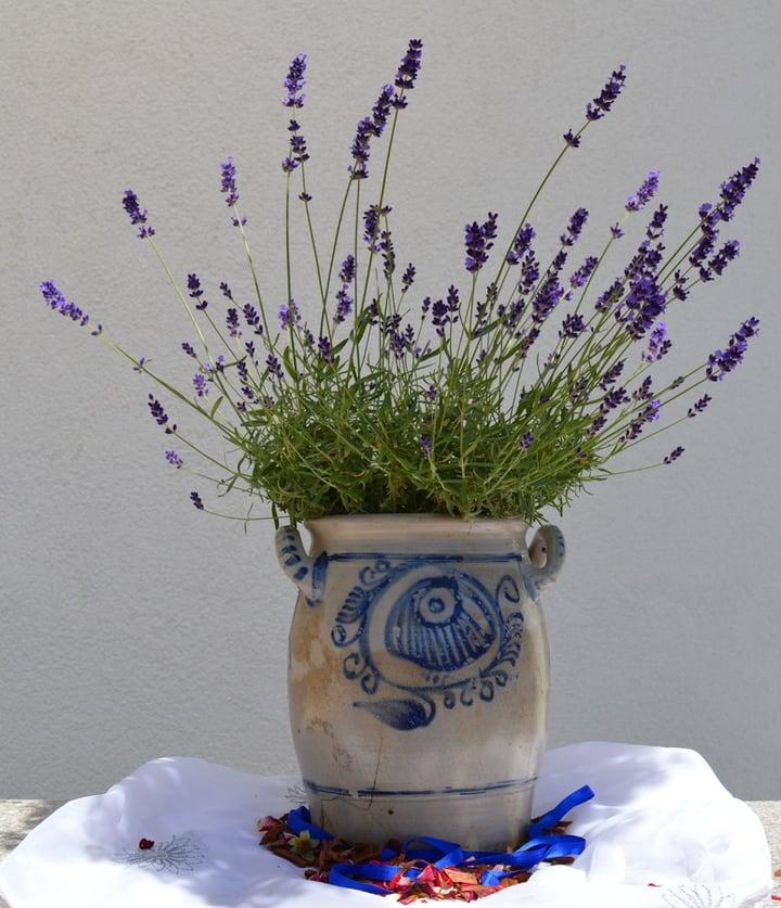 ceramic lavender pot