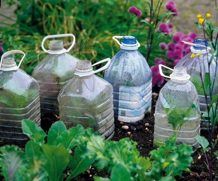 cold frames for winter gardening