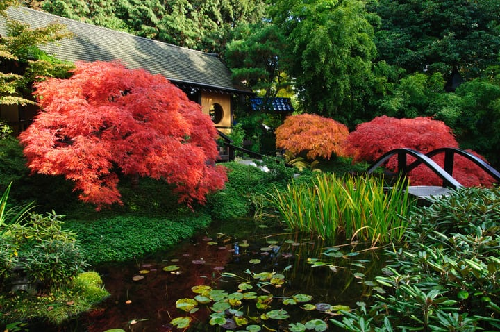 colorful plants in the japanese garden