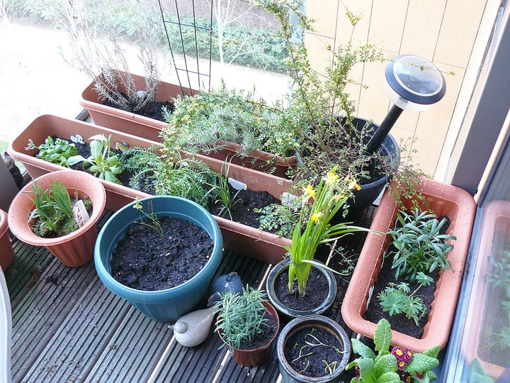different plant pots on a balcony garden