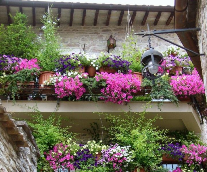 flowers for balcony garden
