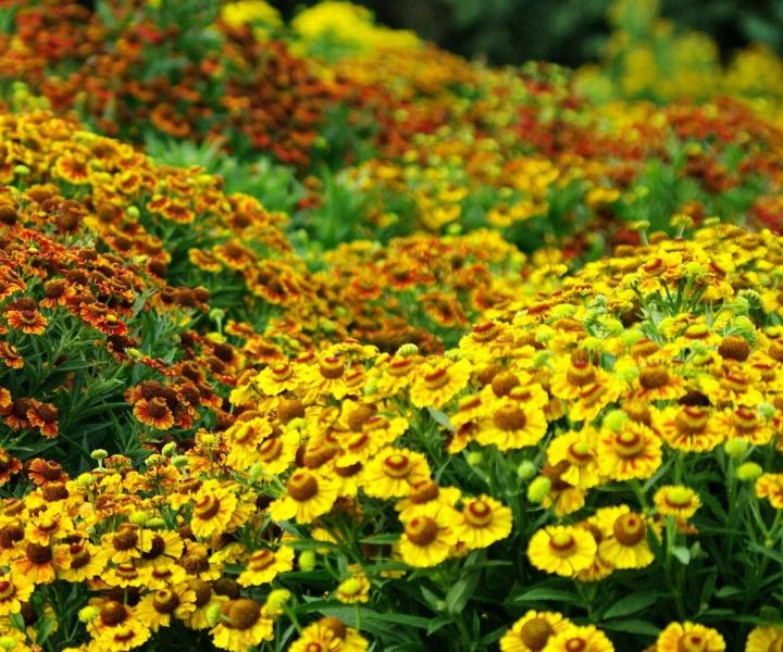 garden bee hive