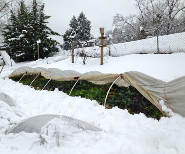 gardening for winter