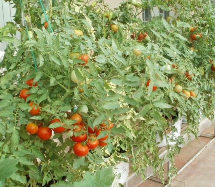 gardening on terrace
