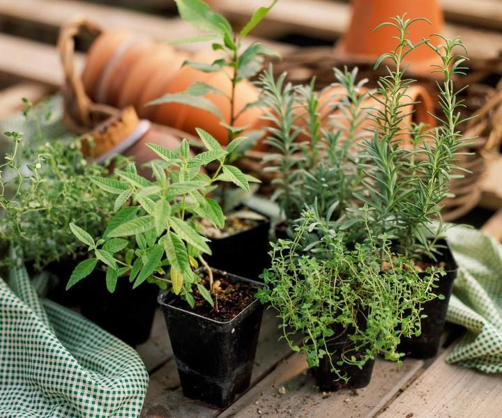 herb container gardening ideas