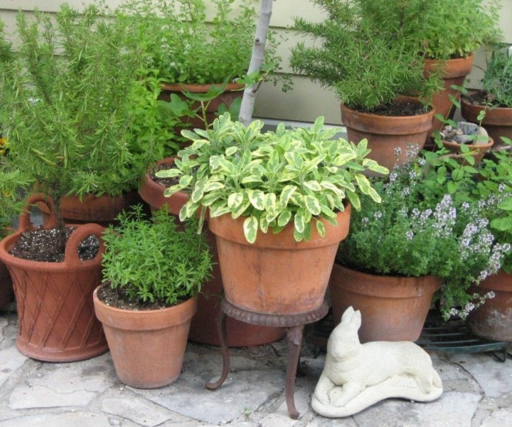 herb gardening in pots