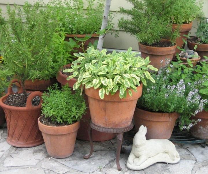 33 Best Herb Garden Ideas How To, Herb Garden Patio