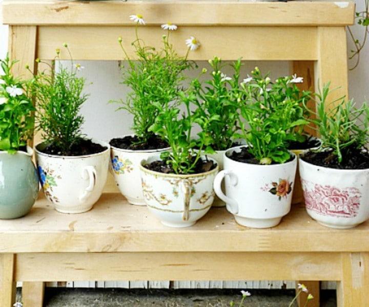 herb gardening kit