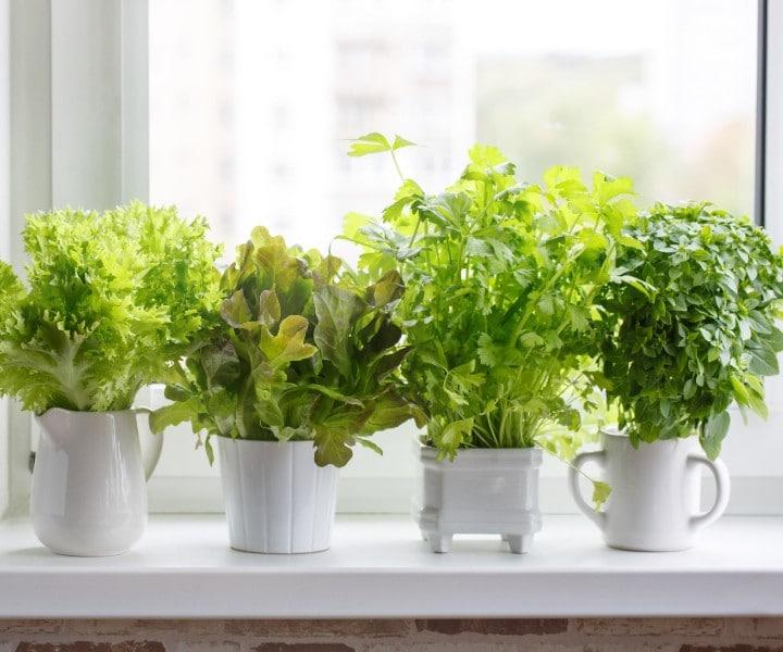 herb gardening pots
