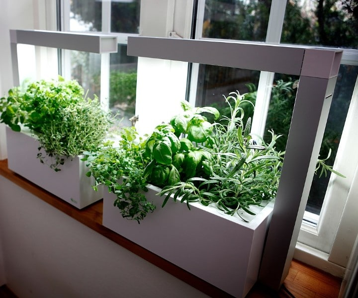 herb grow light