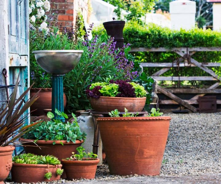 herb growing pot