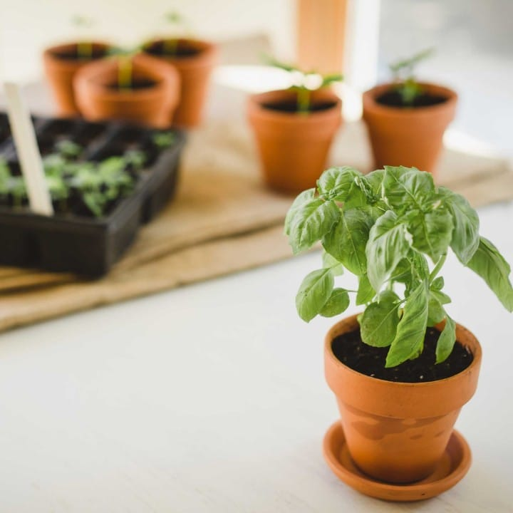 herb plant guide