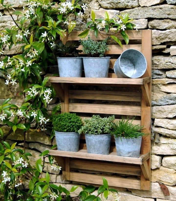 herb plant list