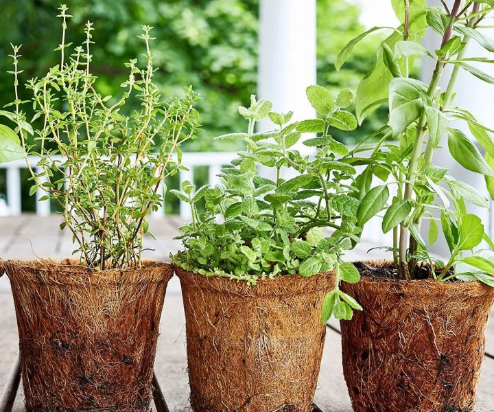 herb plant pictures