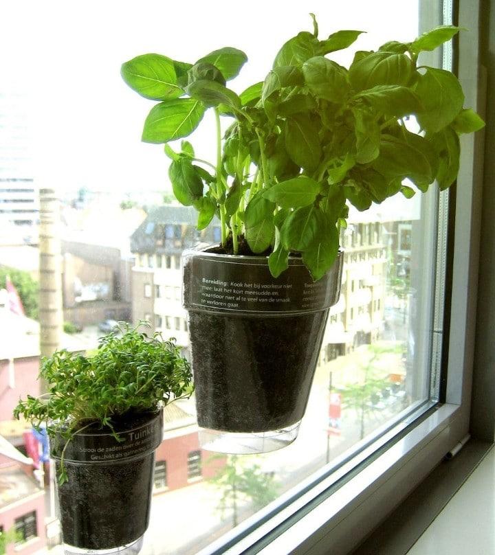 herb plant pot