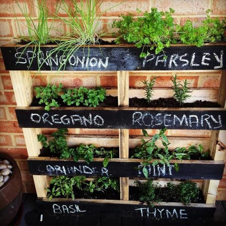 herb plant wall