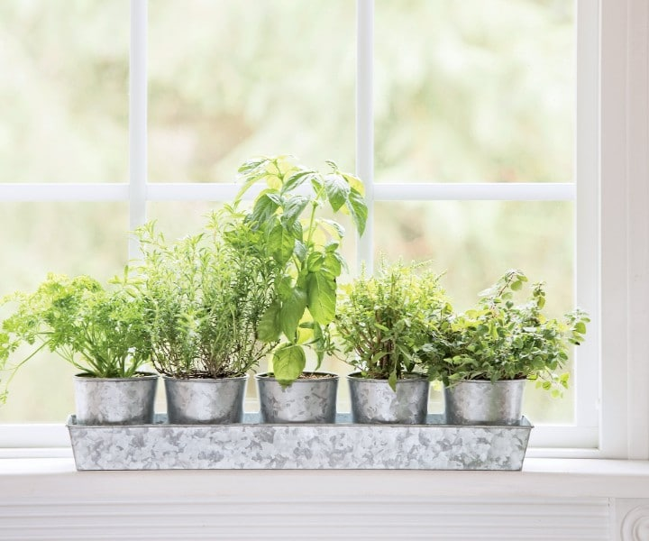 herb pots on tray