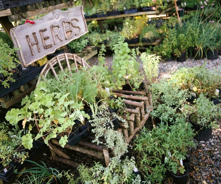 herb pots outdoor