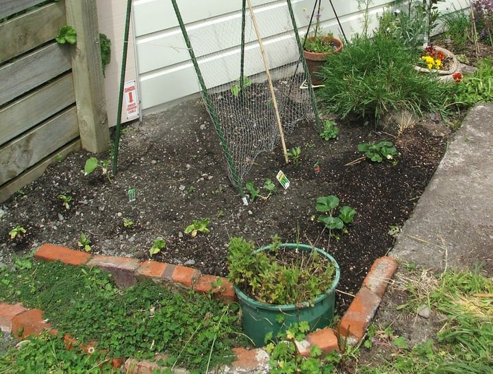 herb seedslings on herb garden