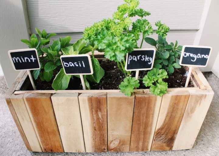 herbs for balcony garden
