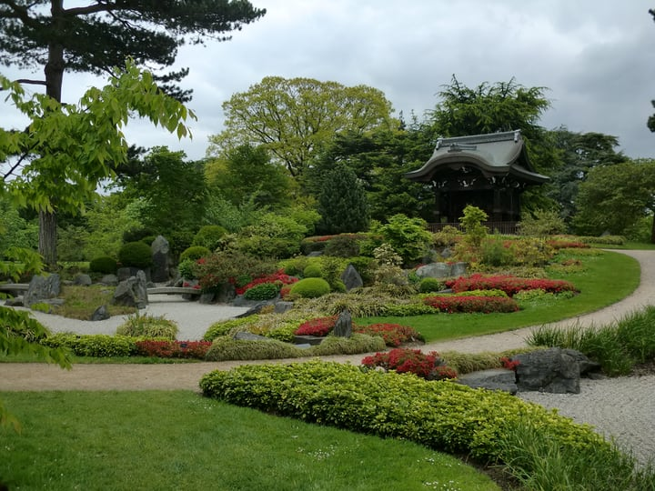 japanese garden featuring plants flowers and rocks
