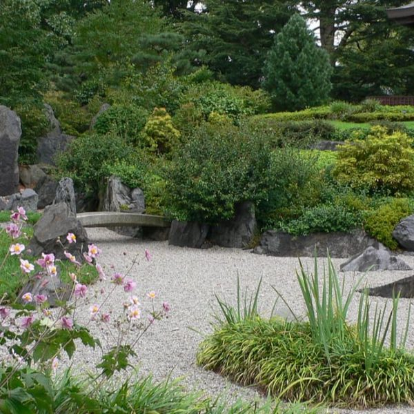 japanese garden with rocks and plants