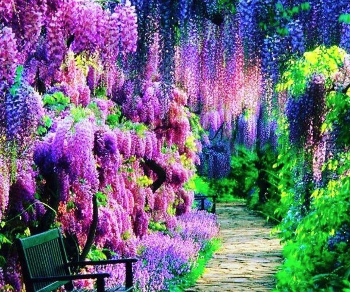 japanese gardens fl