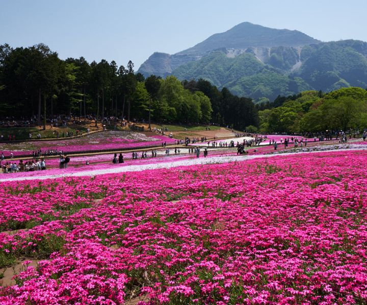 japanese gardens flowers