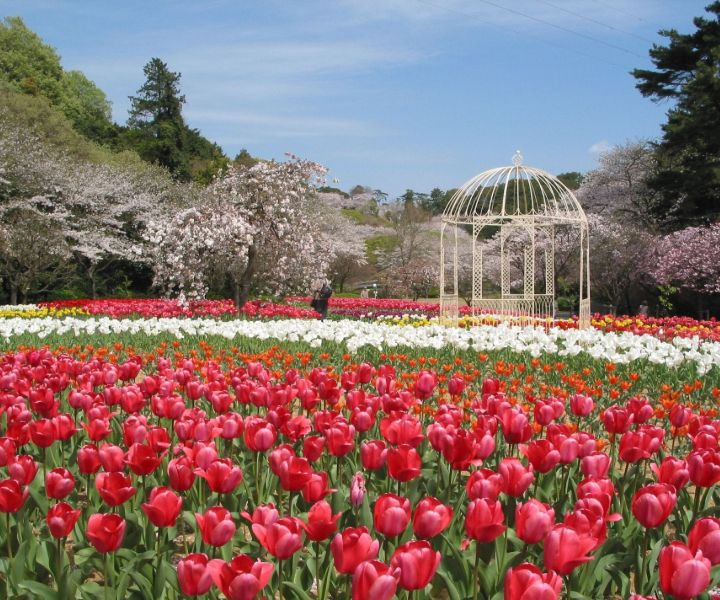 japanese gardens near me
