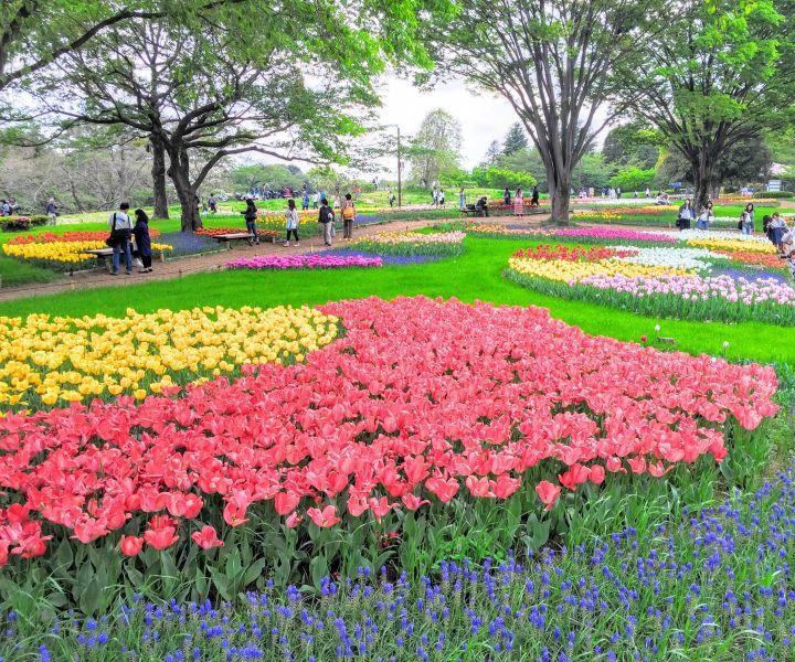 japanese gardens tokyo