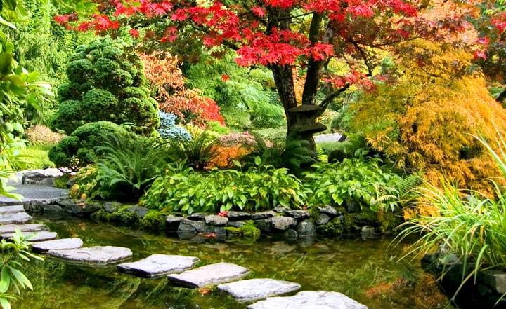 japanese oasis garden