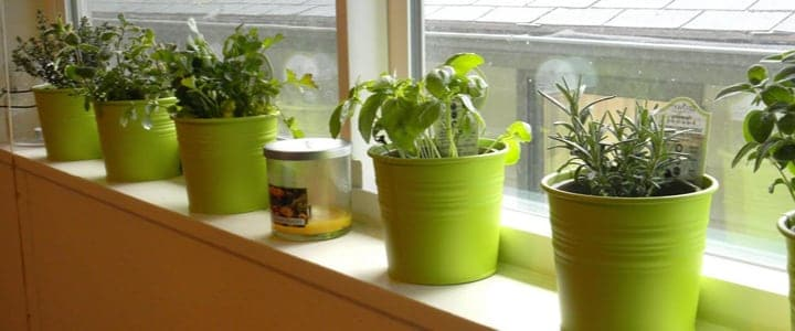 kitchen herb garden with sunlight shining