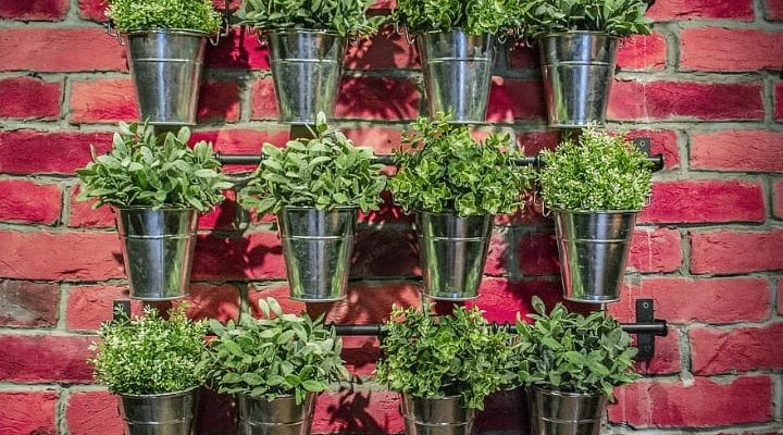 metal bucket plant wall