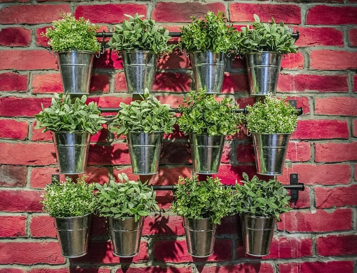 metal bucket plant wall