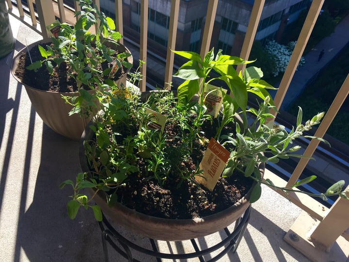 mini balcony herb garden