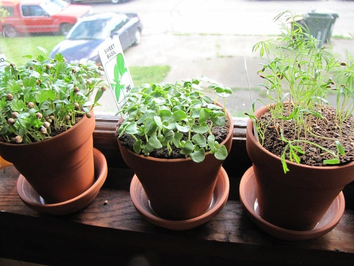 mini herb garden indoors