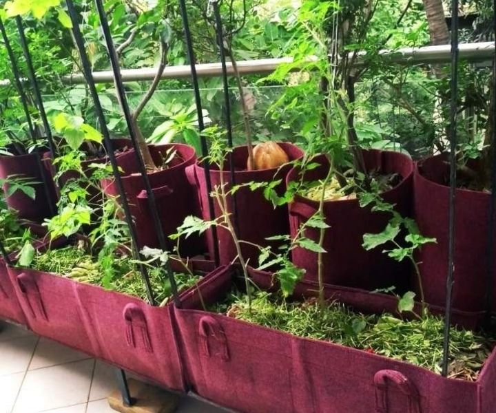 organic terrace gardening in pune