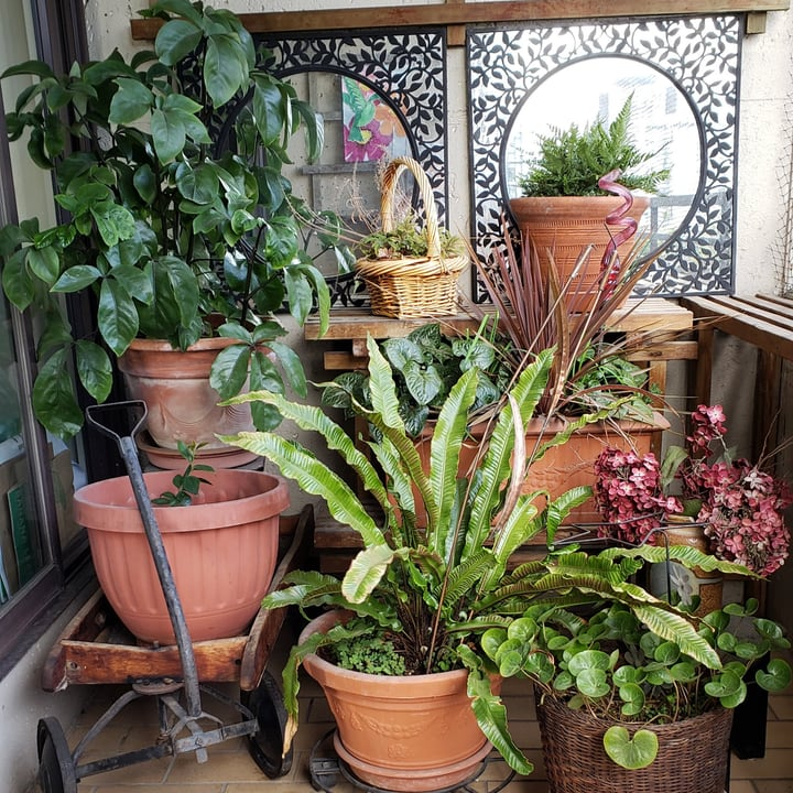 organized balcony garden
