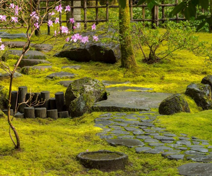 plants for japanese gardens