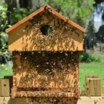 populated beehive