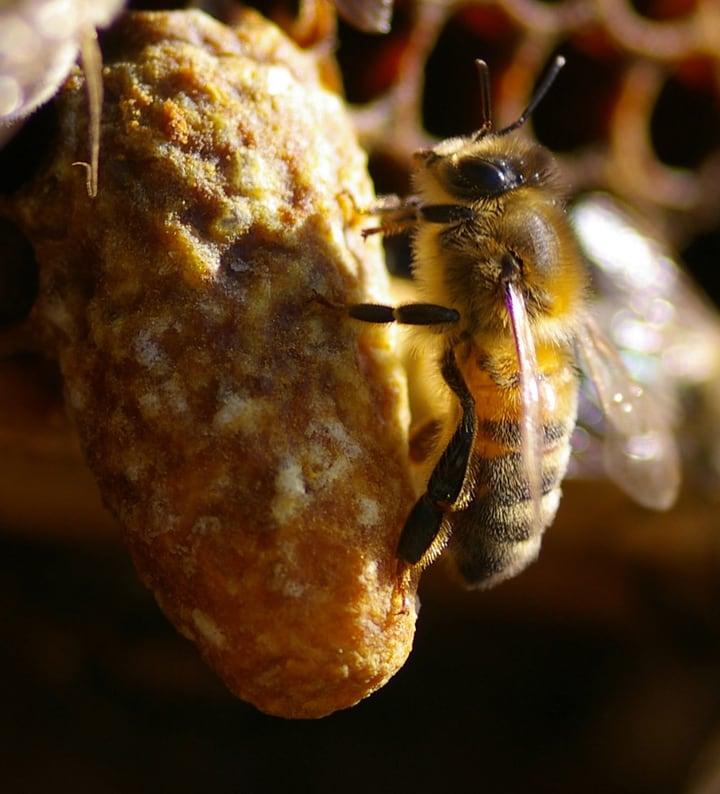queen bee cell