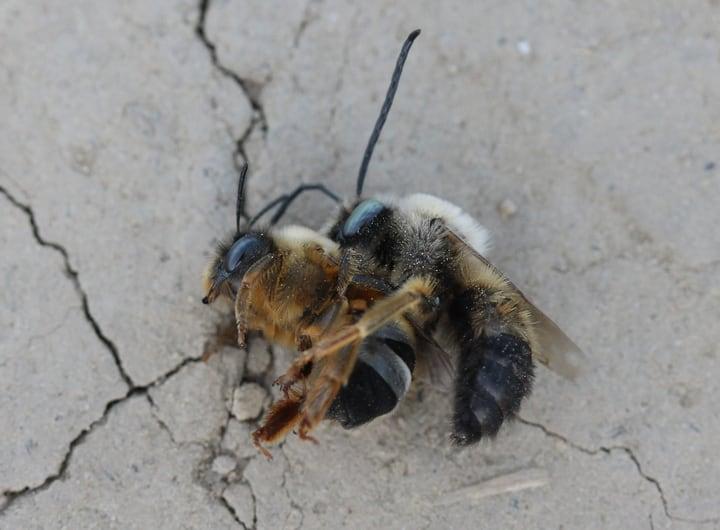 queen bee fight
