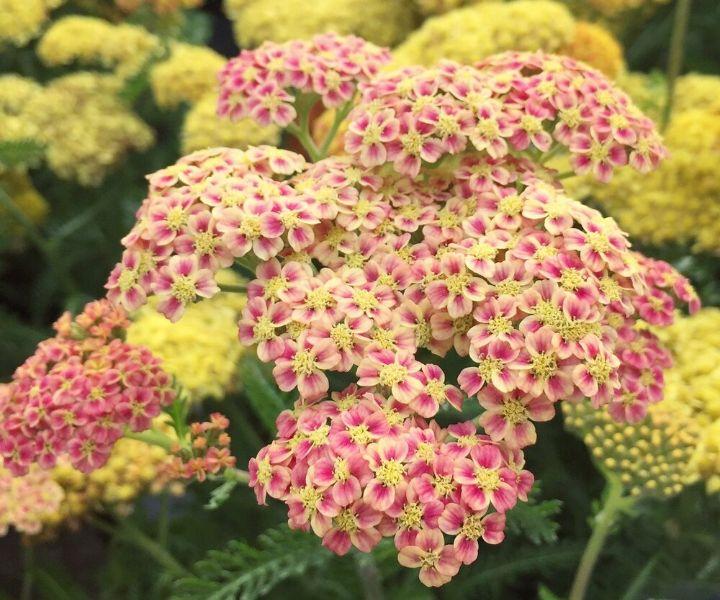 queen bee garden