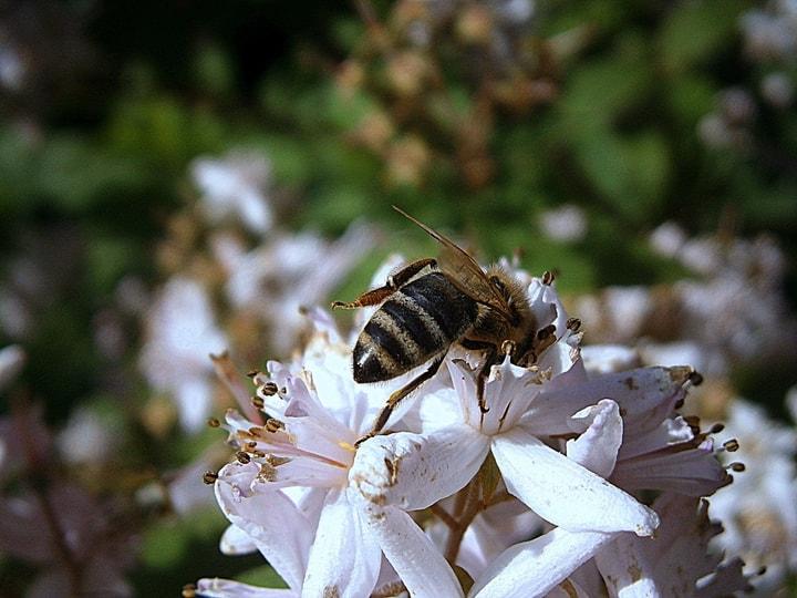queen bee on flowers