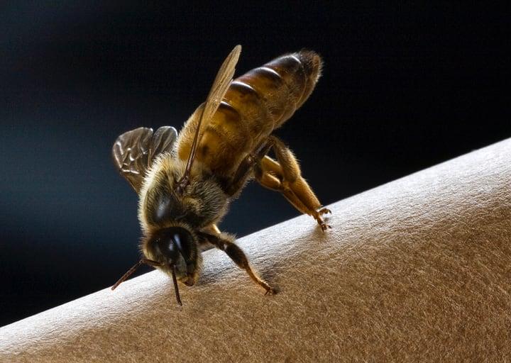 queen bee on her own
