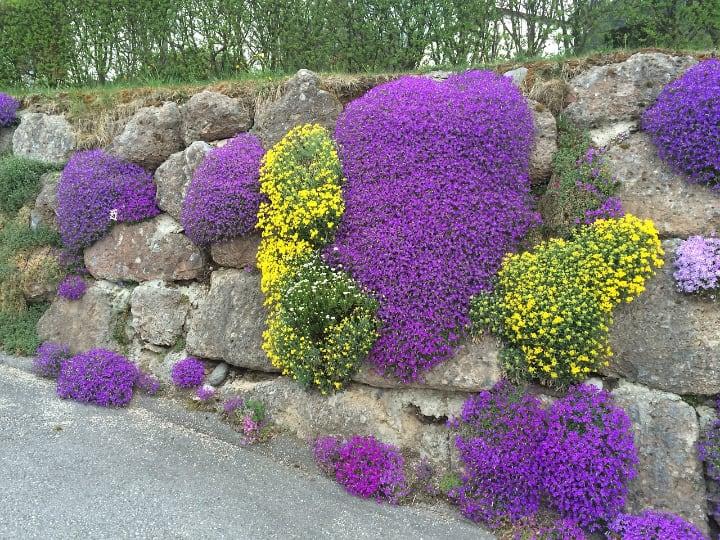 rock garden plant wall