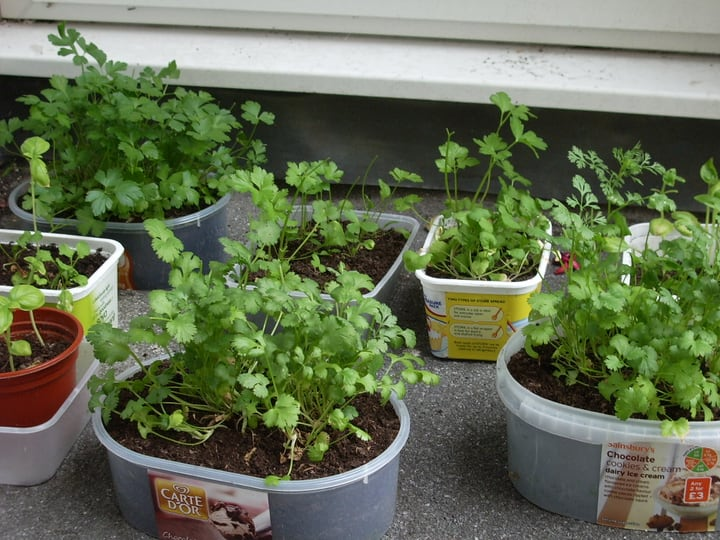 small diy herb garden