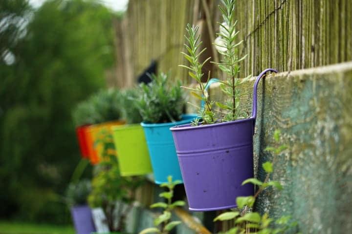 small garden plant wall