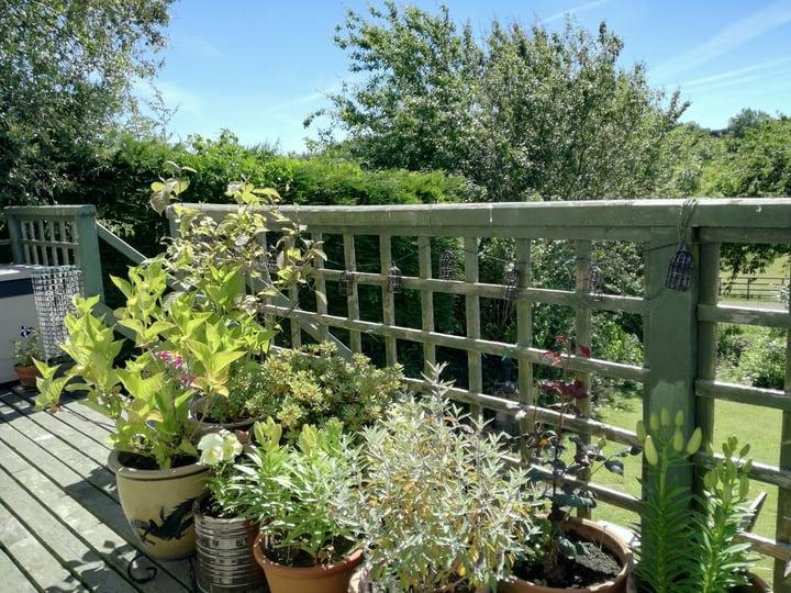 sun lit balcony garden