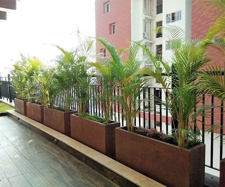 terrace gardening guide